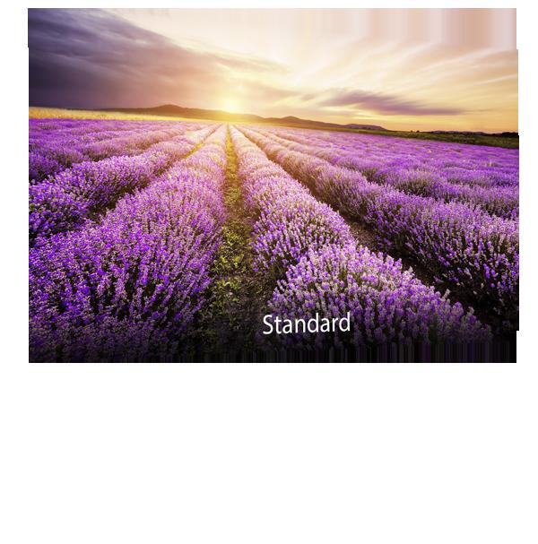 ASUS-Designo-BE24EQSB-Blue-Light-Filter-Standard